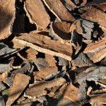 Le cuir de liège est-il le cuir du futur ?
